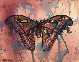 The Atlas Moth by De-Vagrant