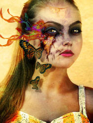and butterflies burn by thephotogenesis