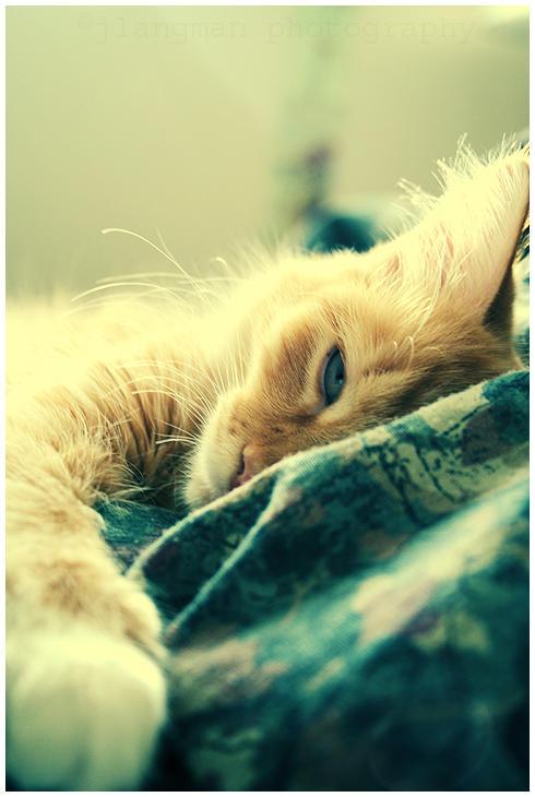 feelin' sleepy by thephotogenesis