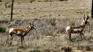 Where the antelope play by herbalcell