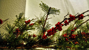 'Tis the season by herbalcell