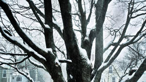 Tree of winter by herbalcell