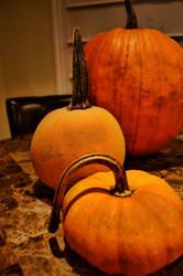 Pumpkin lineup by herbalcell