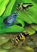 Frogs by bhishma