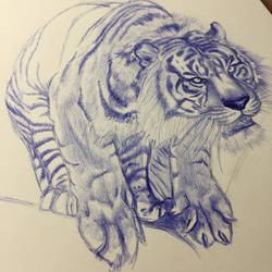 [Work in Progress] Tiger ready to Jump by Danao