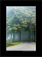 Summer Morning Fog III by sandervandenberg