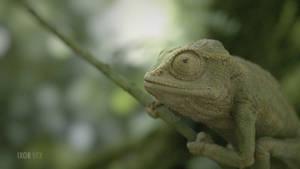 Chameleon RnD by Anmar84