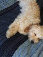 Tired doggo by Q0atDeath666