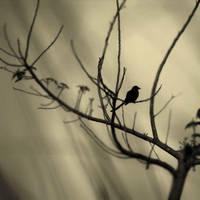 The bird by BlasphemedSoldier