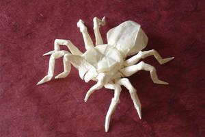 Tarantula-Lang1 by origami-artist-galen