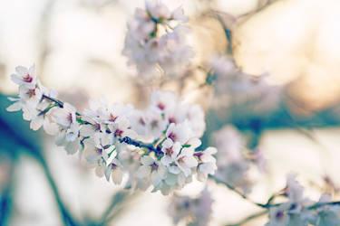 Generic MaFuckin Cherry Blosssoms by K1ntar
