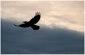 Raven by KKokosz