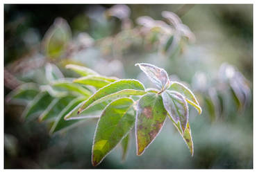November plants I by KKokosz
