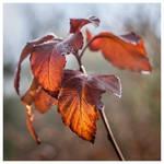 November plants III by KKokosz