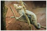 Chameleon by KKokosz