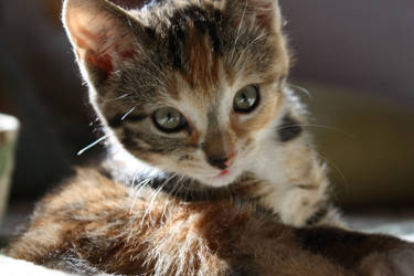 Love you Miss Kitty Fantastico by berndi
