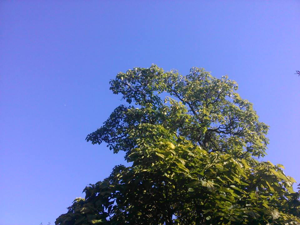 Blissfully by Lark-Catalpa-Royal8