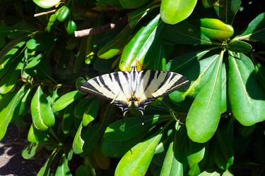 Butterfly by ezio