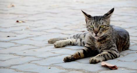 Wild Cat by Fooki