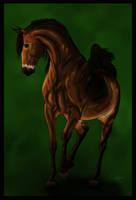 Amir (Bay Arabian OC) by Cascade--Studios
