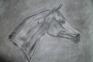American Paint Horse by Cascade--Studios
