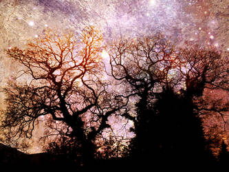 Fractal Trees by GraceDoragon