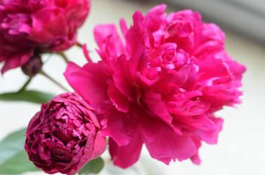 Blossom by GraceDoragon