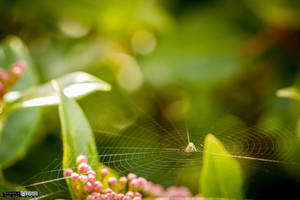 Spider on web by lepixtolero