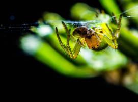 Green Spider by GeorgeAmies