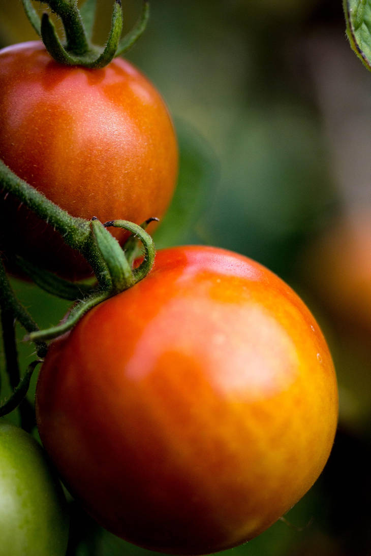 Tomatoes by GeorgeAmies
