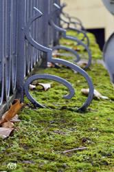 Mossy Fence by Seleyana