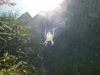 Spiderweb by piranbell