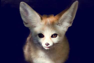 Fennec Fox III by Avestra