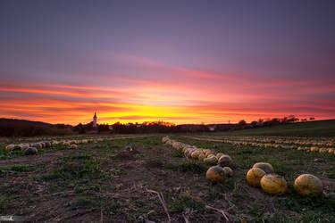 Pumpkins by TomazKlemensak