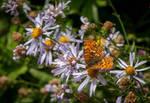 Summer flutter by kayaksailor