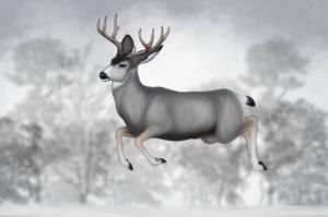 Deercember #21 - Mule deer by snow-89