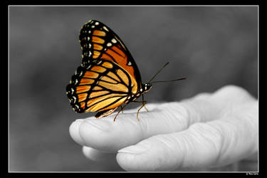 Butterfly Color by critter