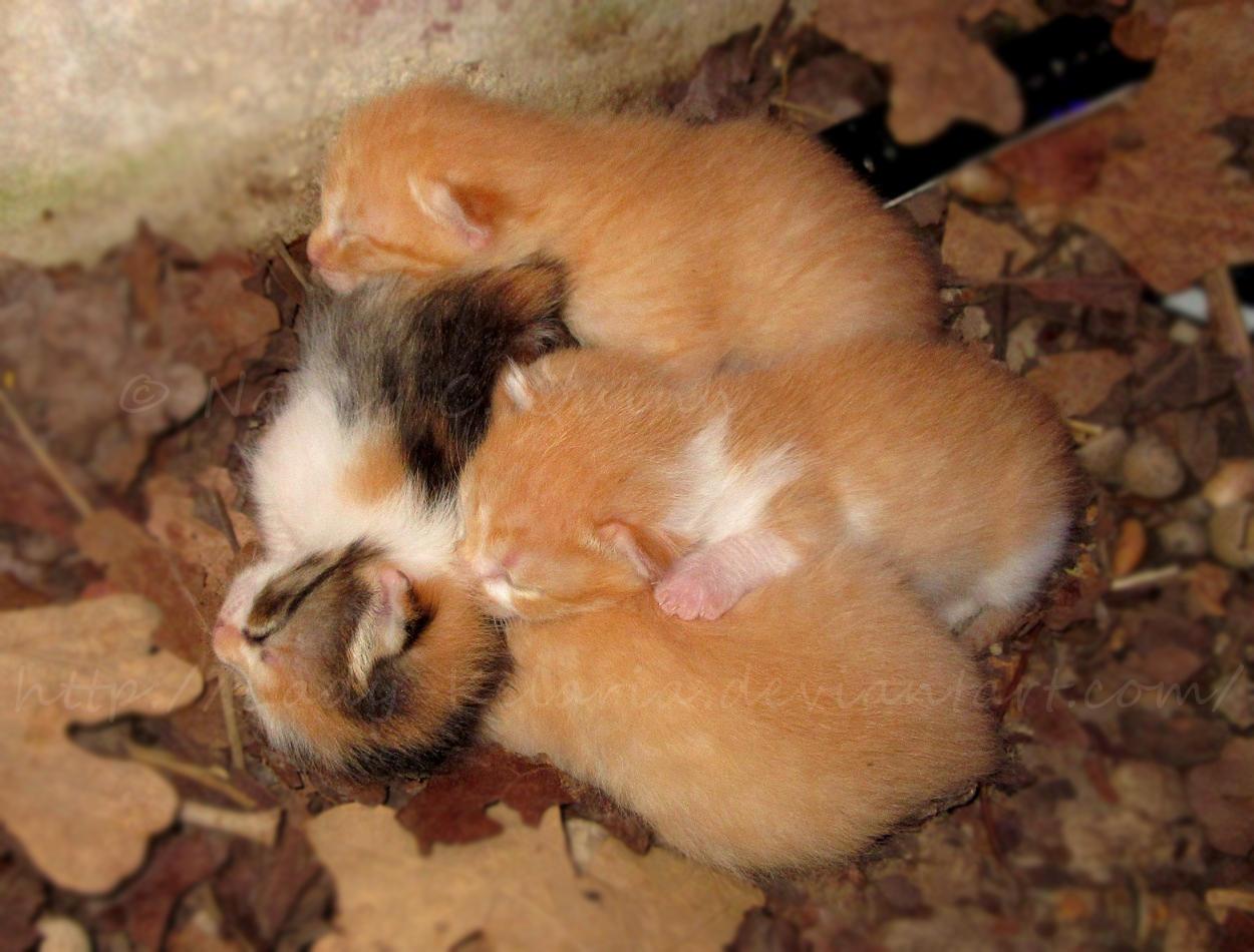 Kitten Pile by Lady-Kelaria