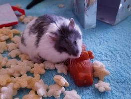 Christmas Hamster by Lady-Kelaria