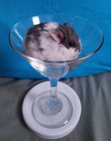Hamstertini by Lady-Kelaria
