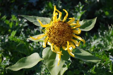 In Full Bloom by DoktorBock