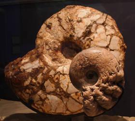 Ammonite-1-updated by hotwiar