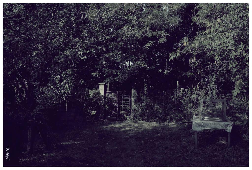 backyard by aniripal