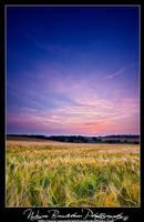 Still Wheat by Wayne4585