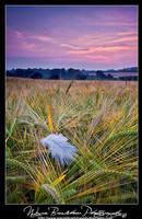 Feathered Wheat. by Wayne4585