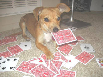 Card Playing Puppy by Allison-W0nderland
