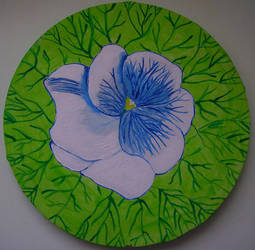 Pansy by Spiddles