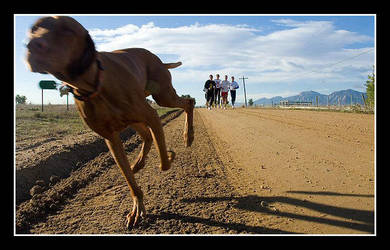 Run Sparky Run by Lactate10MileRun