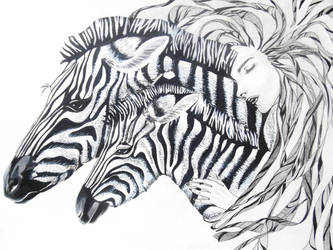 Cebras by CarolCuibin