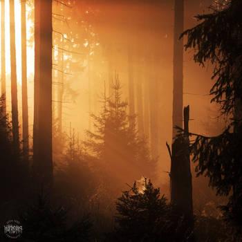 Goldener Herbst by Noirerora